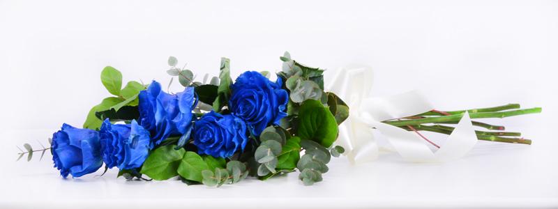 Modre_ruze.jpg
